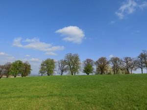 trees-385219_640